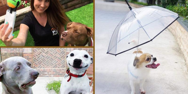 🐶 45 IDEE REGALO per CANE che il tuo cucciolo adorerà! 🐕 🐕 🐕