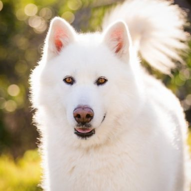 Sbiancante Pelo Per Cani