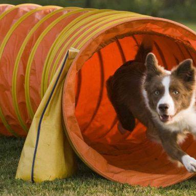 Tunnel Agility Portatile Per Cani