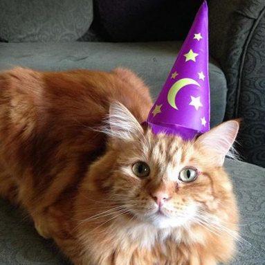 Cappello Gonfiabile Per Gatto