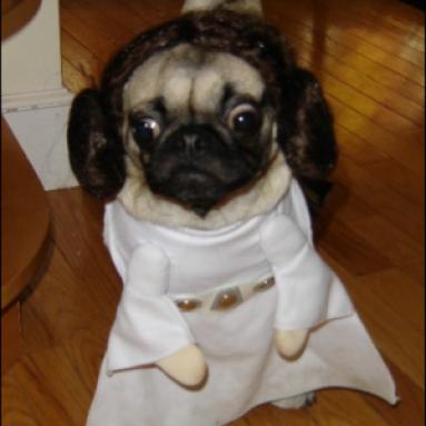 Costume Per Cani Principessa Leila Star Wars