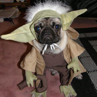 Costume Da Yoda Per Cane