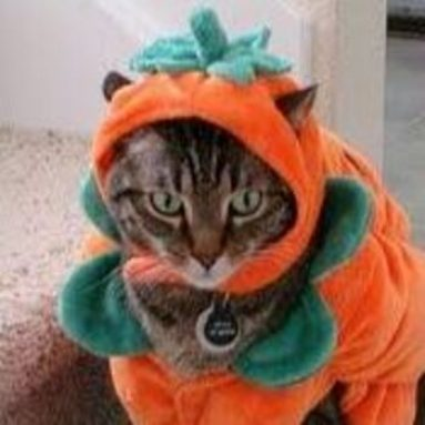 Costume da Zucca Per Gatto