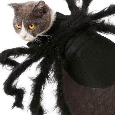Costume Da Ragno Per Gatto