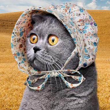 Cuffietta Per Gatto