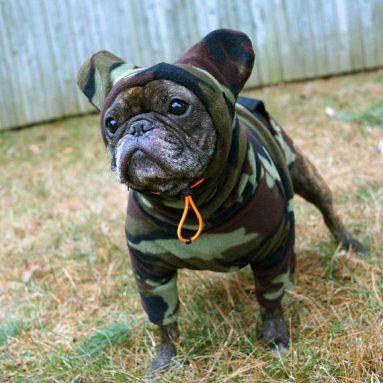 Felpa Copriorecchie Per Bulldog