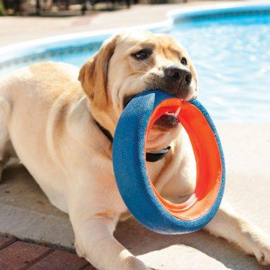 Frisbee Galleggiante Per Cane