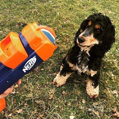 Blaster Nerf Per Cani