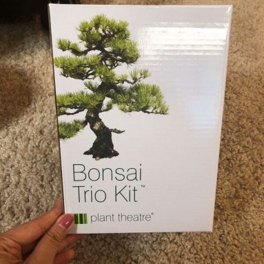 Kit Per Coltivazione Bonsai