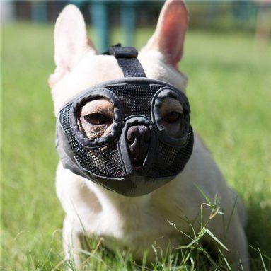 Museruola Per Bulldog