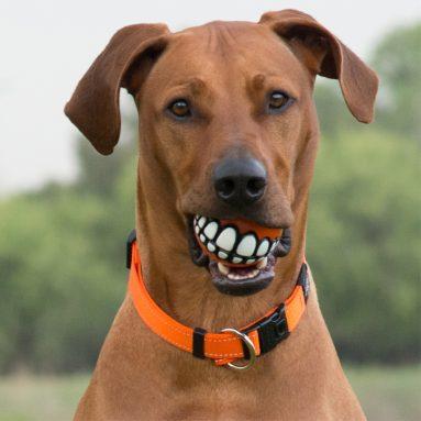 Pallina Dentata