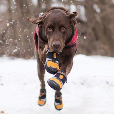 Scarpe Antiscivolo Per Cani