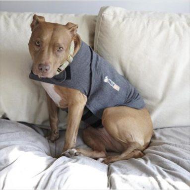 Cappotto Anti Ansia Per Cani