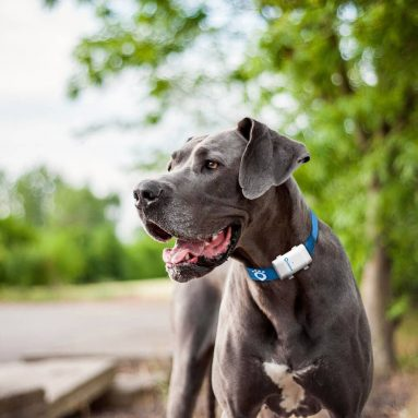 GPS Tracker Per Cani