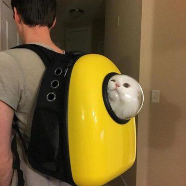 Zaino Oblò Per Gatto